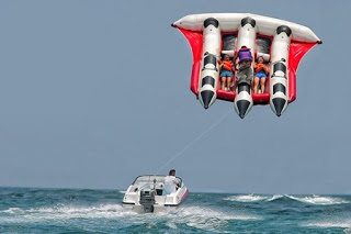 All About Bali Flying Fish
