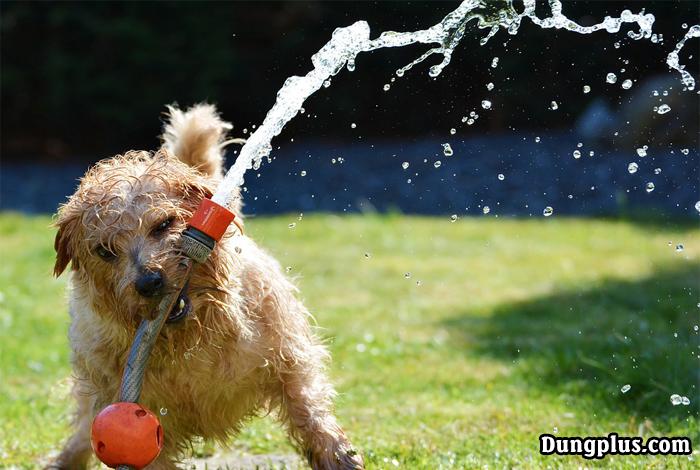 Chó nghich vòi nước