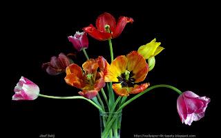 http://wallpaper-4k-tapety.blogspot.com/2015/02/tulipany.html