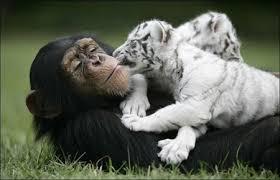 [Человек] Основы экологии животных