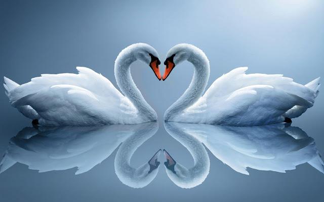 Sepasang Hati