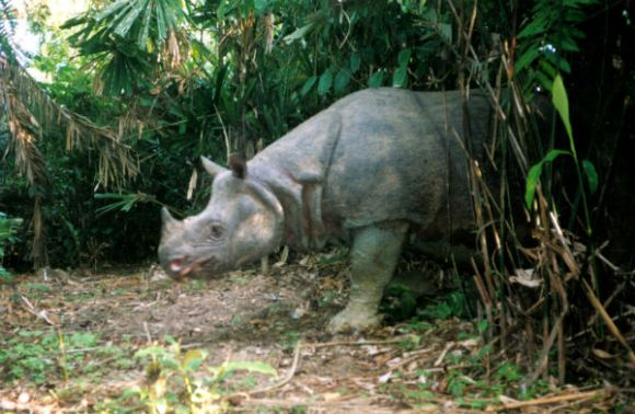 Most Endangered Animals In The World
