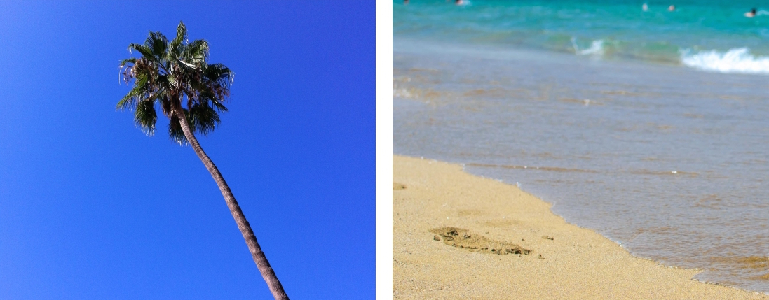 Palm tree, Sandy beach