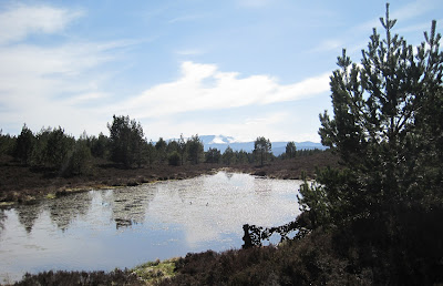 View of Lochnagar from Creagan Riabhach, Deeside