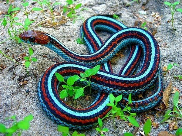 Animal pictures: 8 Oddly colored animals | Amazing Creatures