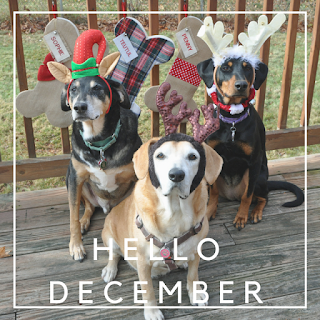 christmas december dogs rescue