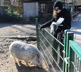Wildgehege-Moritzburg-Schweine