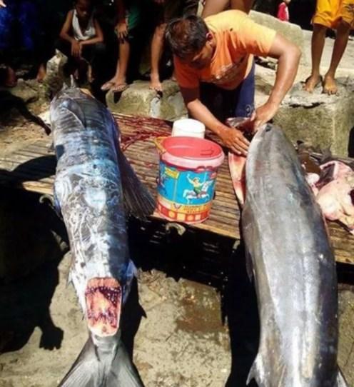 Mengejutkan, Ikan Bergambar Tato Di Sekujur Tubuhnya Tertangkap di Filipina