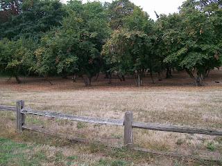 ALHFAM 2016. Filbert/hazelnut trees. Dorris Ranch, Springfield, OR.