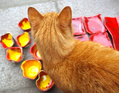 Rudy kotek na podwórku