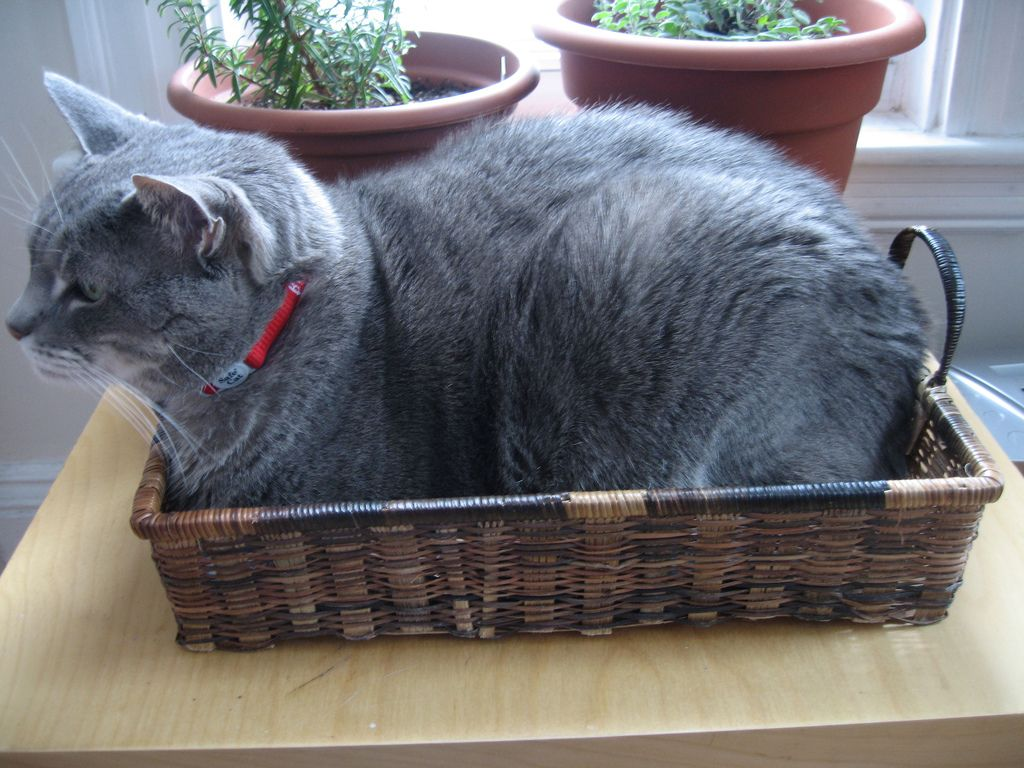 18. Cats in Basket by Aaron Weber