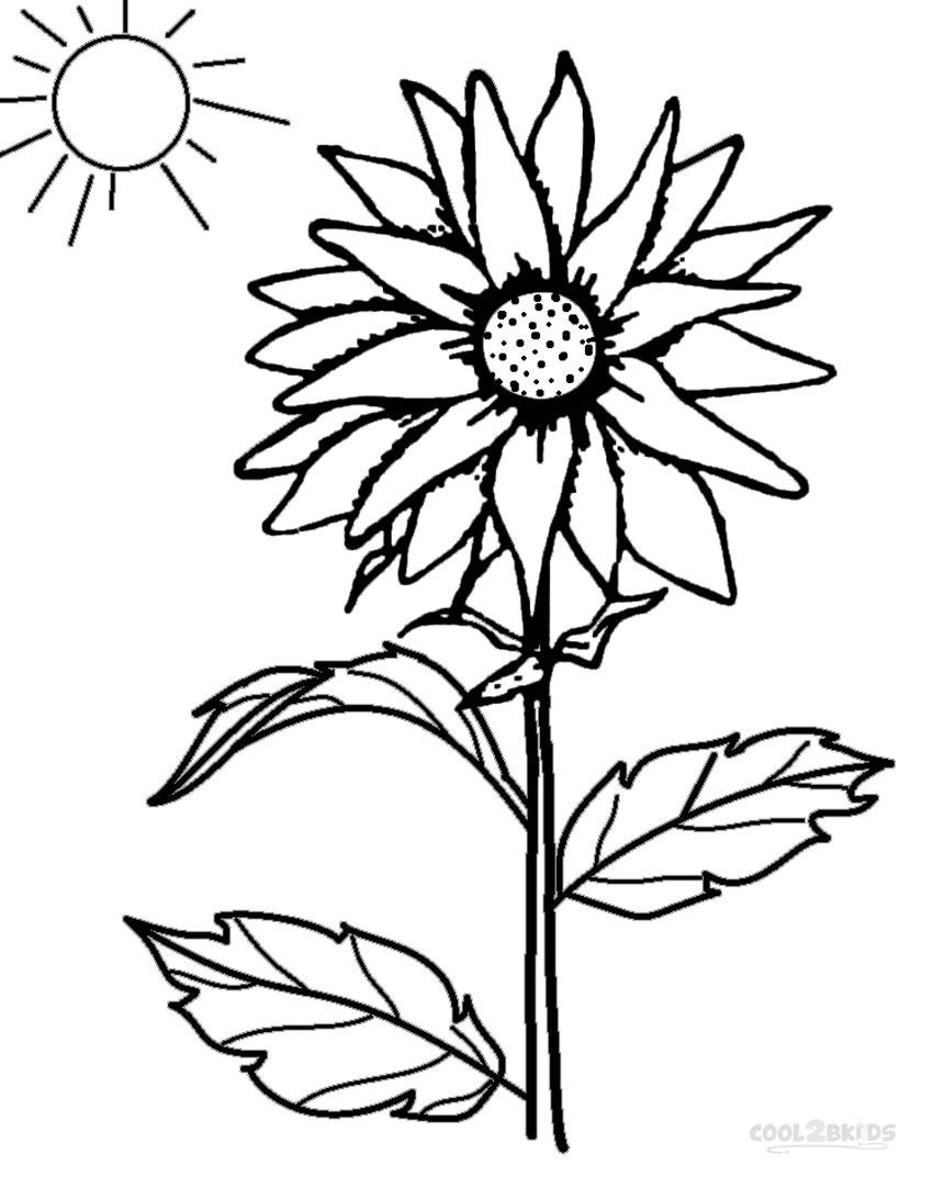 Unique sunflowers coloring pages images free coloring for Sunflower coloring book pages