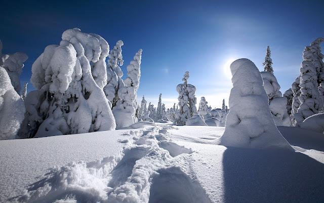 Winterlandschap met dik pak sneeuw