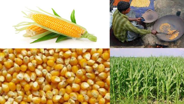 Pakistan's Major Crops ~ The Land OF Hospitality