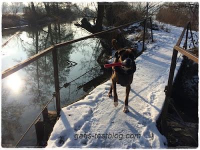 Boxer Amy auf der alten Brücke