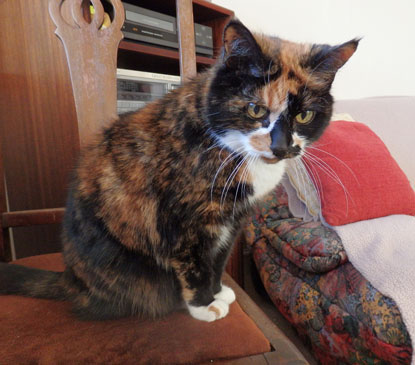 Elderly Cassie got a second chance at a happy home