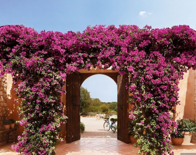 Bougainvillea Garden on the Patio