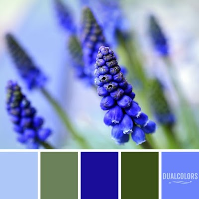 Color Paleta 159