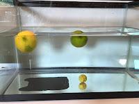 Key Lime vs. Lime Sink or Float, Float or Sink
