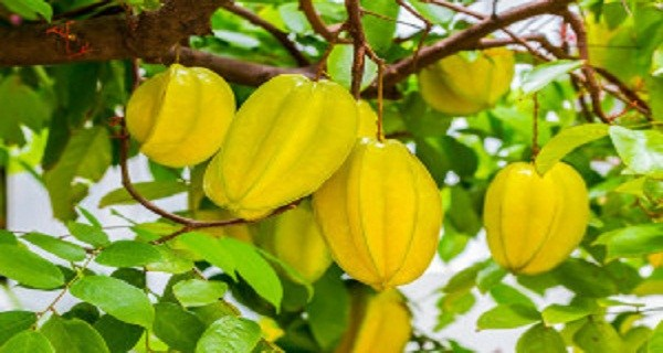 Have you heard about this miracle fruit?? It controls diabetes, lowers cholesterol and fights inflammation
