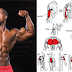 Muscle Day : Upper-Body Muscle Exercises
