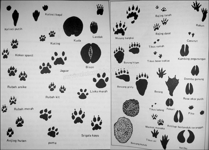 Gambar Anjing Tanah