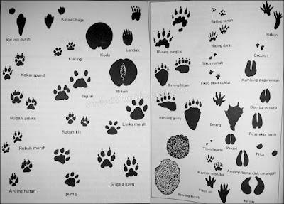 membaca jejak hewan