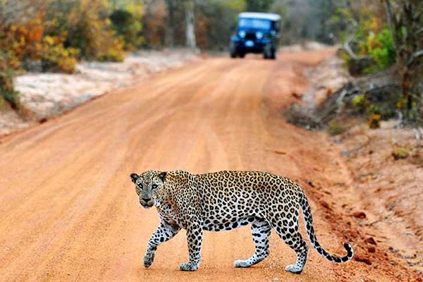 Yala National Park.