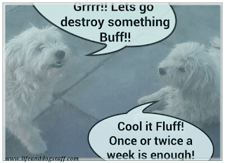 Fluffy and Buffy conversation