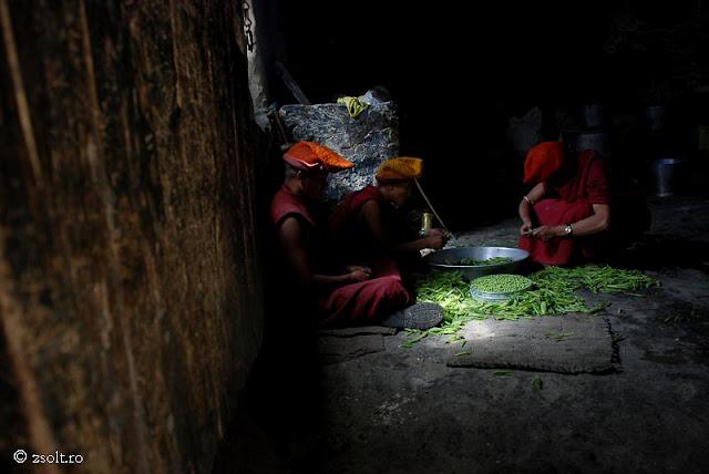 Tibetan Buddhist Monks Working With Green Pea