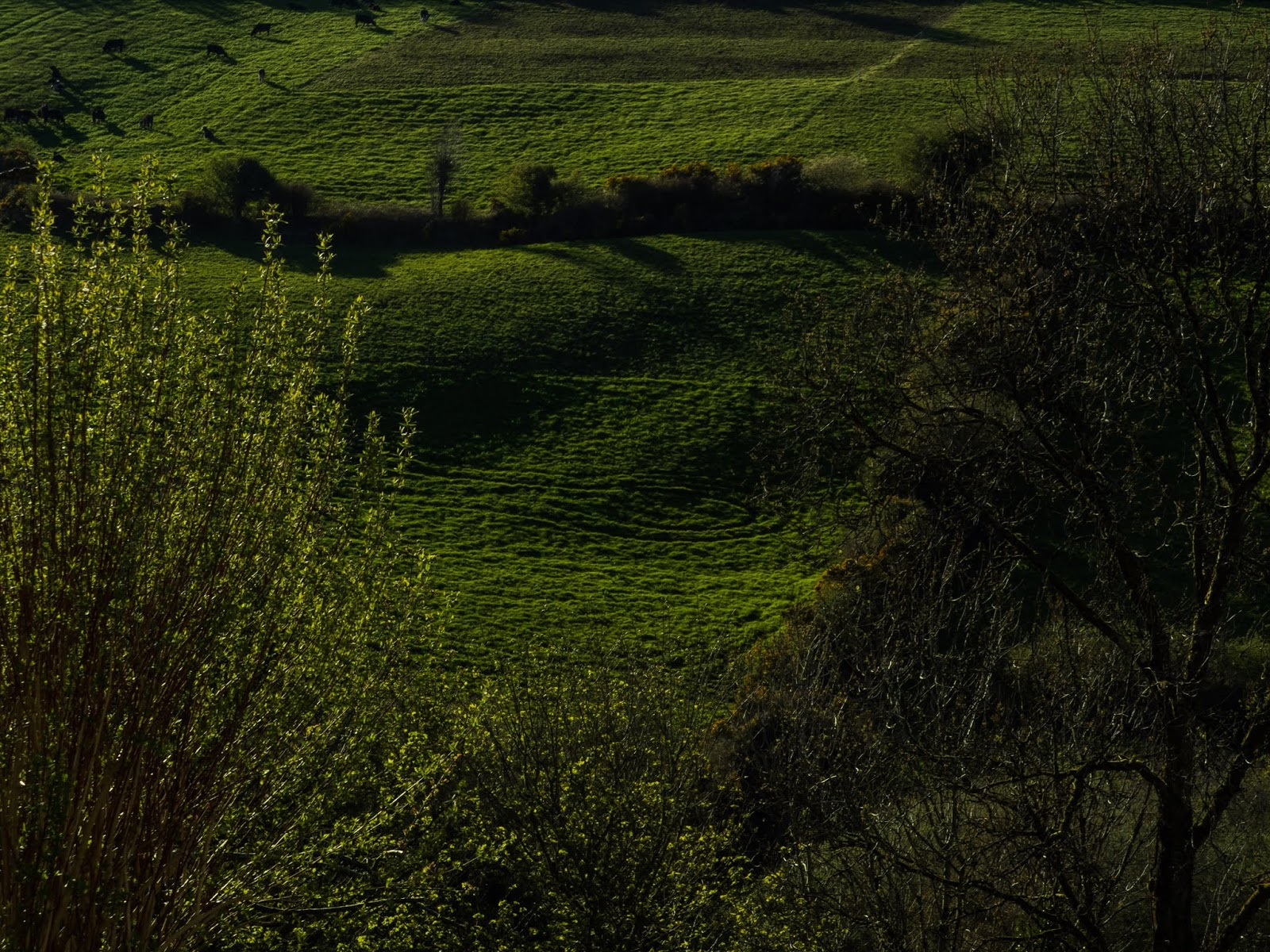 Green rolling hills at sunset casting shadows on the mountainside field.