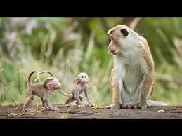 The Beauty of Monkey - Full Documentary