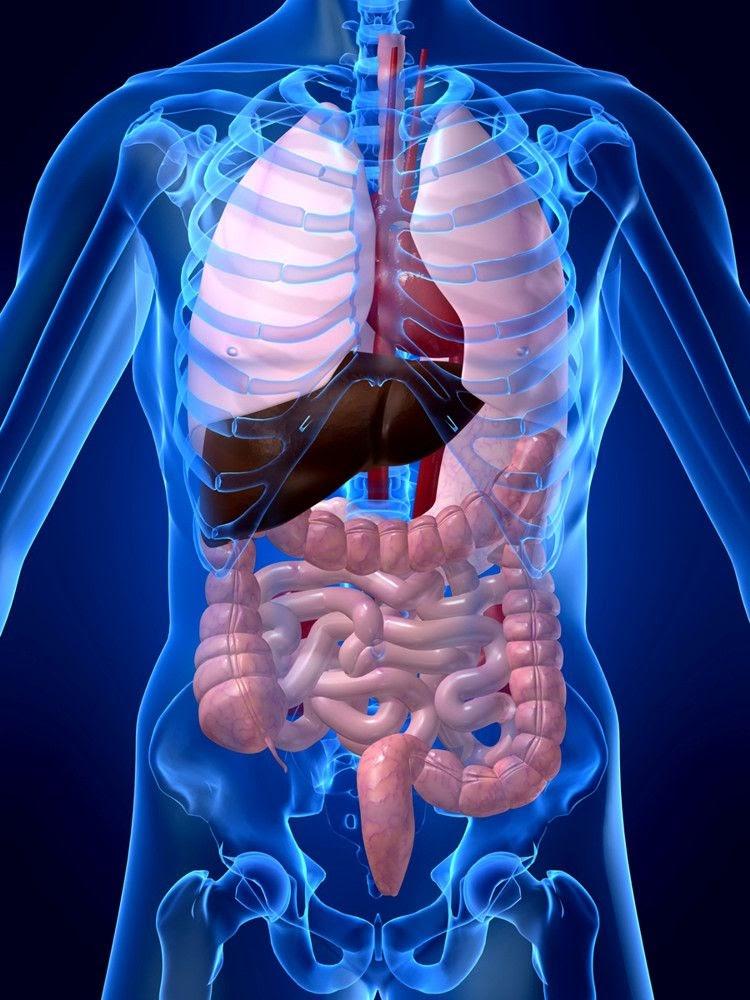 anatomia del sistema digestivo i cavidad bucal a est mago. Black Bedroom Furniture Sets. Home Design Ideas