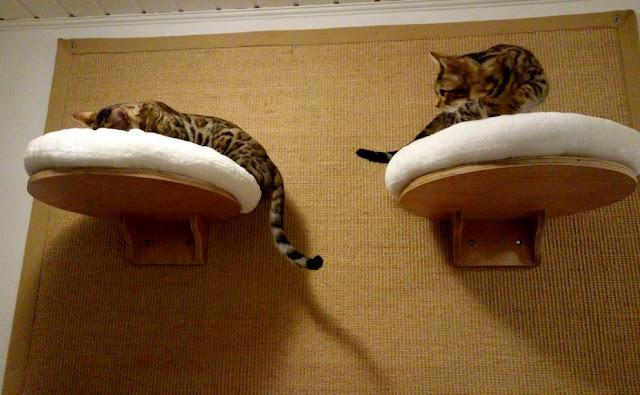 Sisalteppich Katze