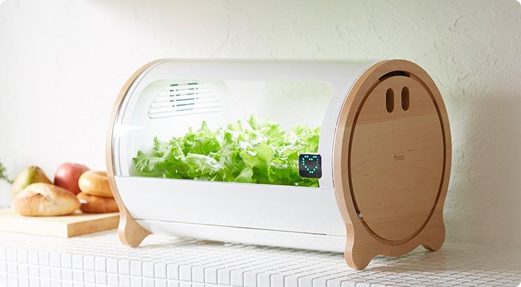 foop อุปกรณ์ปลูกผักในร่ม