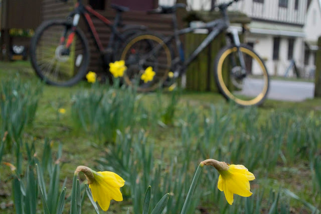 daffodils bikes in the background