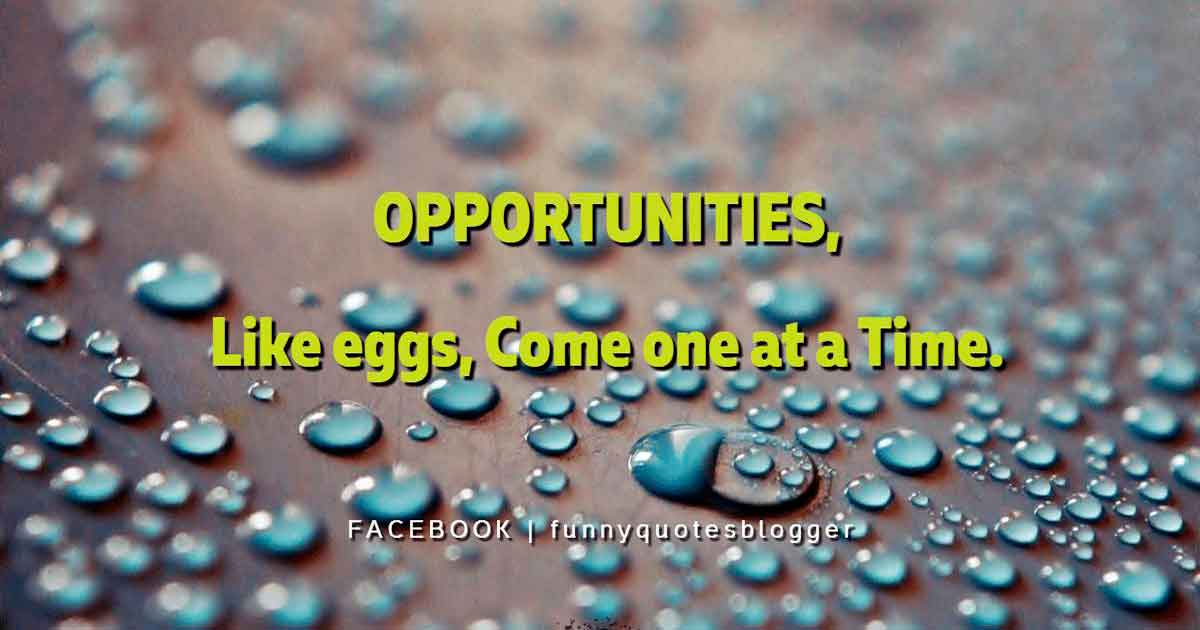 Opportunities, like eggs, come one at a time. ― American proverbs wisdom
