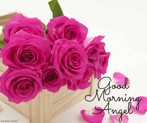good morning angel with roses