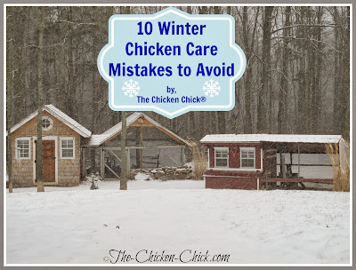 Chickens fare much better in cold temperatures than in hot weather due to their unique physiology and ability to regulate their body temperatures, but they still need our help to create the ideal environment in which to survive winter.