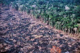 Resultado de imagem para Amazônia devastada