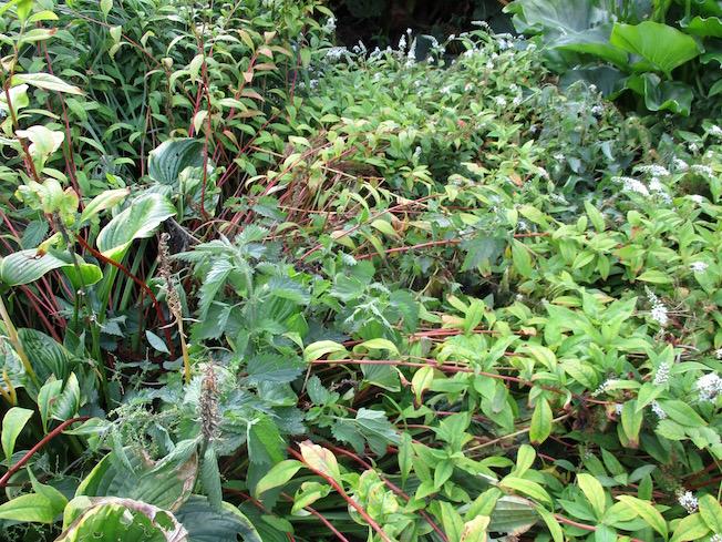 Roger Brook The No Dig Gardener Elimination Of Nettles And