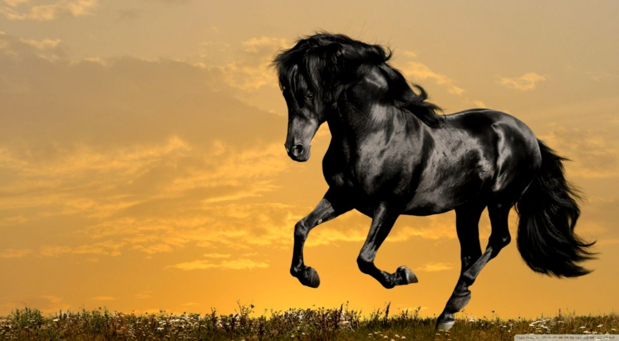 Download wallpaper x unicorn horse art fire ultrawide