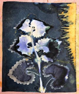 Wet cyanotype_Sue Reno_Image 588