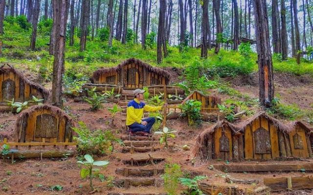 Hutan Pinus Grenden Magelang