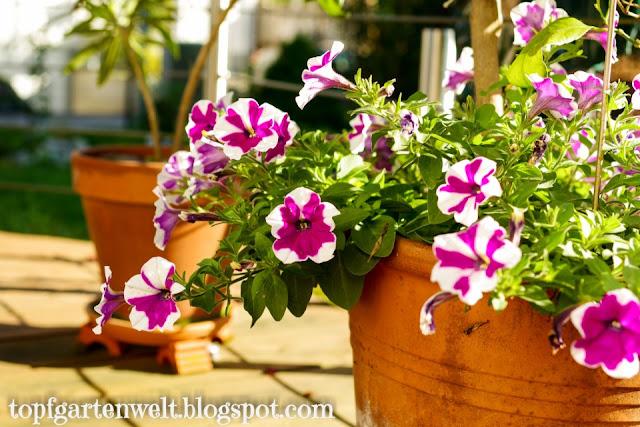 Topfgarten für Balkon und Terrasse gestalten - Gartenblog Topfgartenwelt