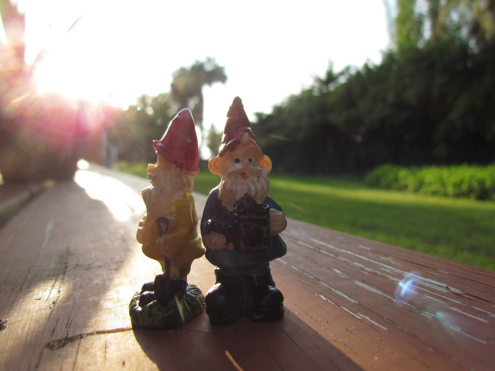 Gnome Love and Brotherhood in the Backyard of a Tropical Florida Backyard at Magic Hour