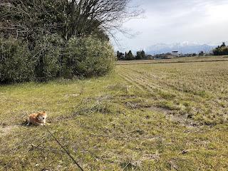 刀尾神社の裏手より見た立山連峰の立山(雄山)・剱岳と柴犬ゆき富山市