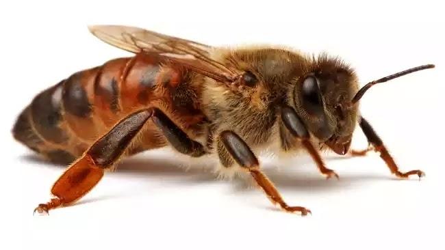 Απίστευτο περιστατικό στην Εύβοια: 74χρονος ψαράς πέθανε από τσιμπήματα μελισσών