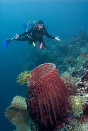 Diving at Wakatobi