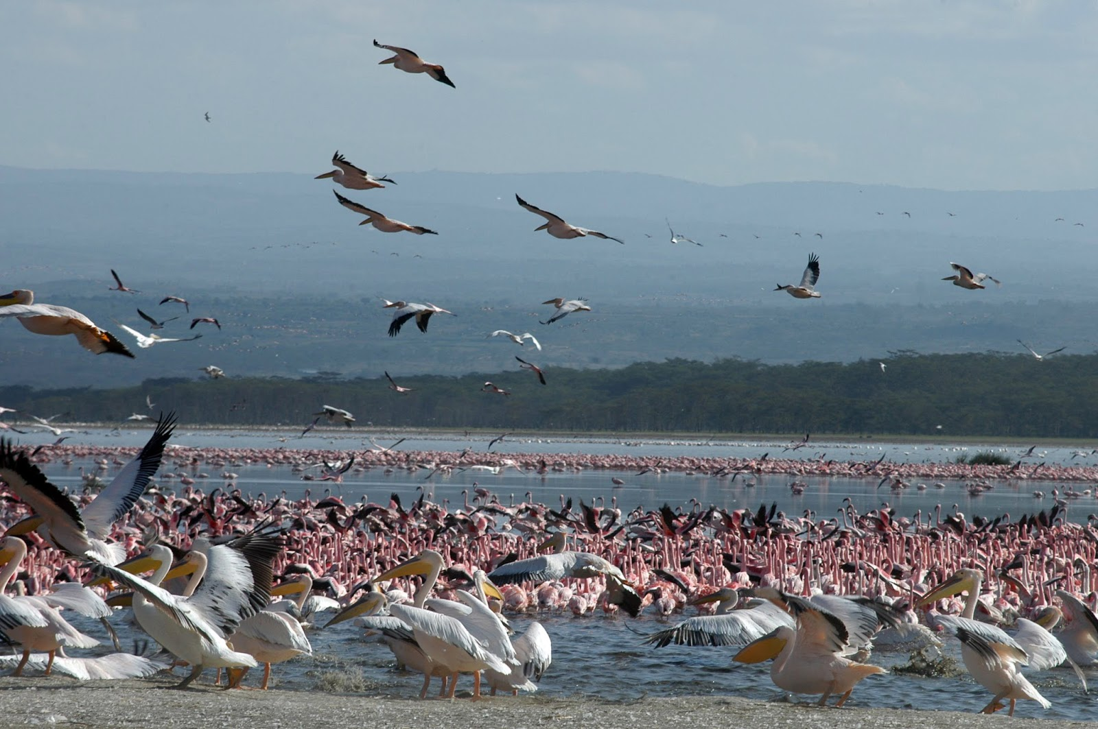Lake Nakuru The Great Rift Valley, Kenya